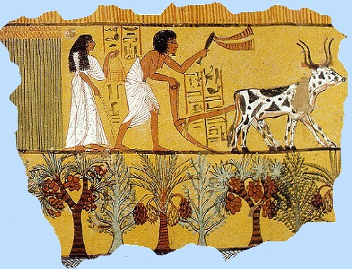 On Agriculture, History and Sustainability