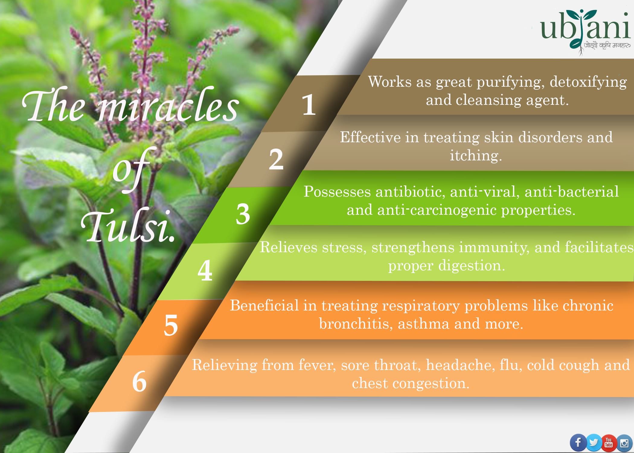 The Miracles of Tulsi