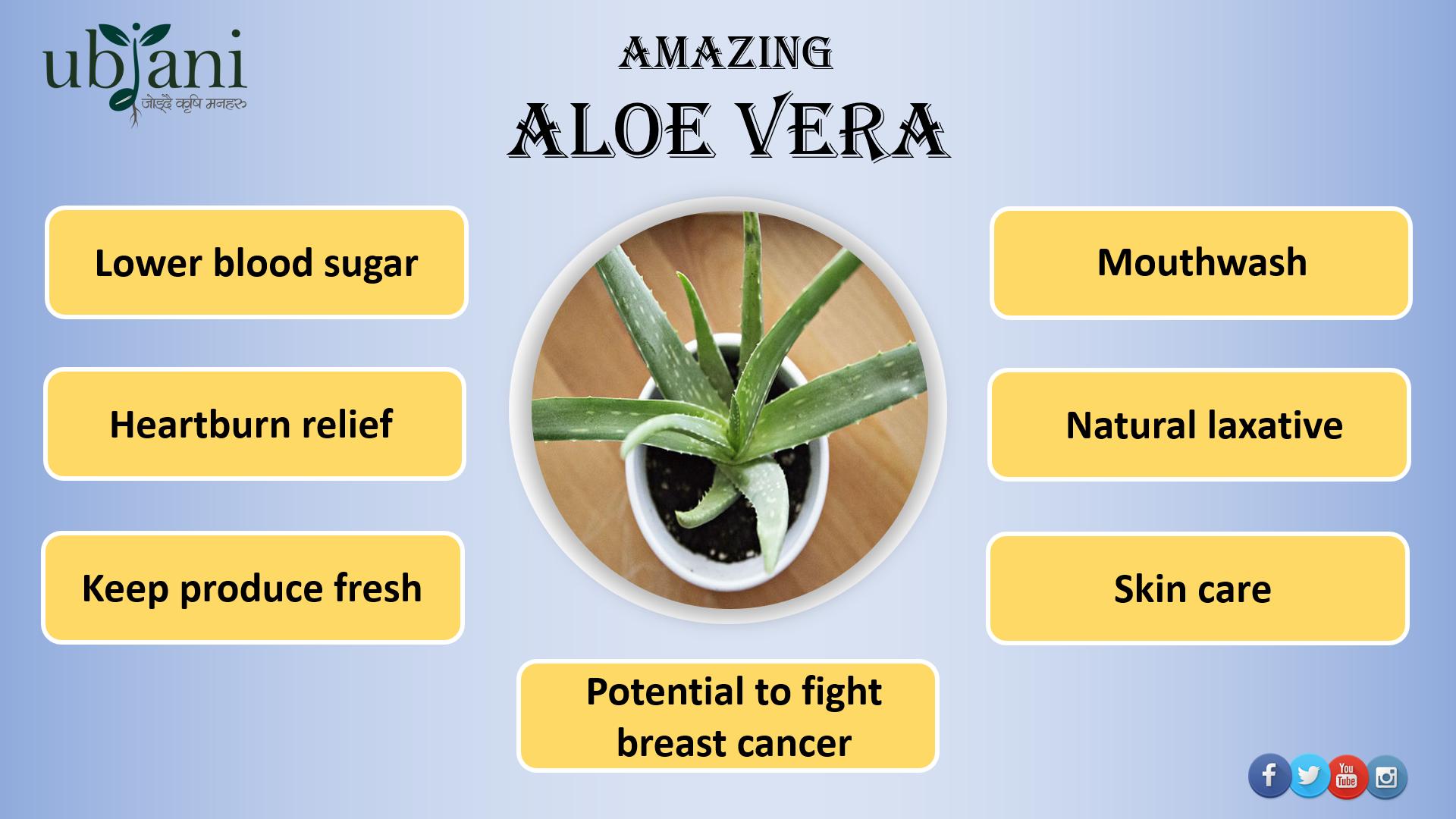 Amazing Aloe Vera