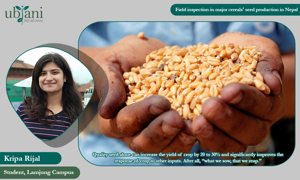 An Overview on Need and Process of Field Inspection in           Quality Seed Production in Nepal